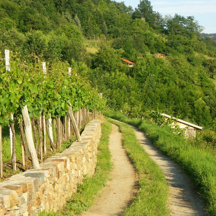 Wanderweg am Weingarten in der Wachau